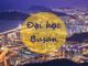 dai-hoc-busan